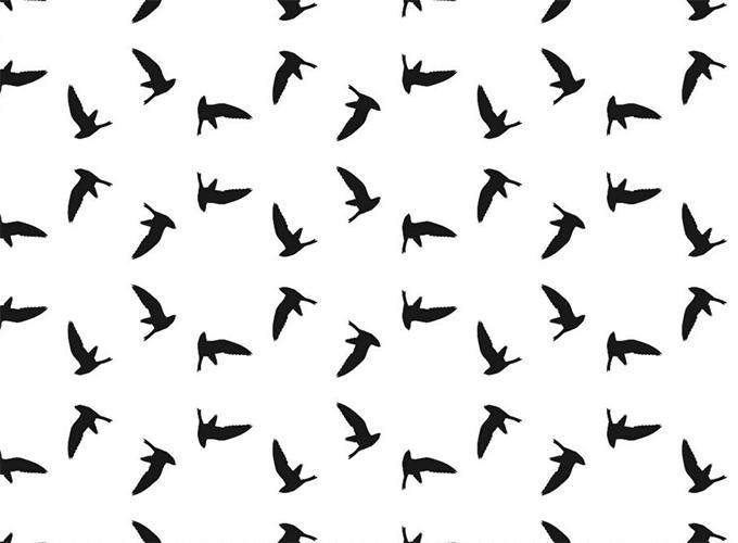 Custom Bird Lamiante
